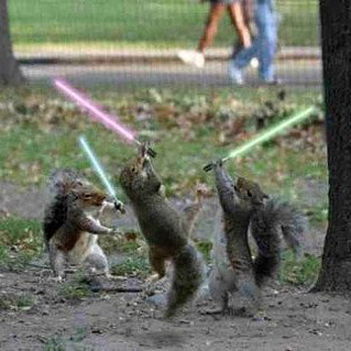 Kirk Allmond's squirrels with Light Sabers